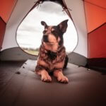 dog camping IL state park